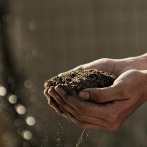 Gnojiva za tlo