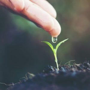 Gnojiva za sve vrste supstrata (tlo, kokos ili hidro)