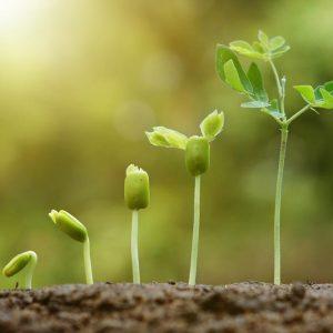 Stimulatori za rast