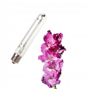 Žarulje za cvatnju / Bloom