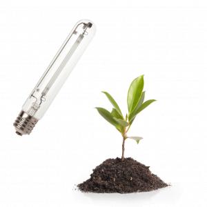 Žarulje za vegetaciju / Veg